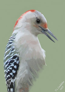 Female Red-Bellied Woodpecker portrait print by Judy Link Cuddehe for Found Link Press.