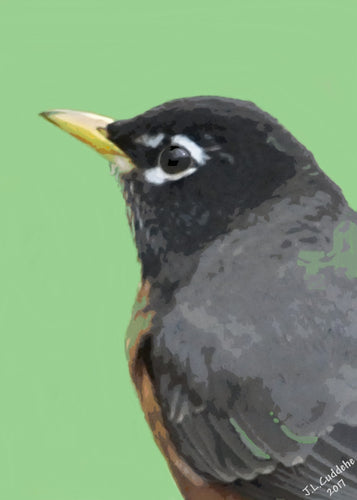 Robin portrait print, harbinger of spring, by Judy Link Cuddehe for Found Link Press.