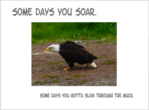 """Some Days You Soar"" Card"