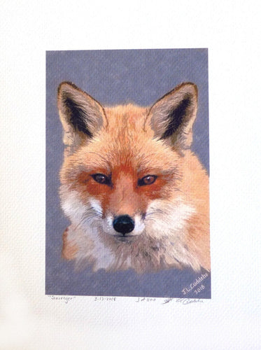 Red Fox Print by Judy Link Cuddehe for Found Link Press.