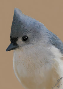 Tufted Titmouse portrait print by Judy Link Cuddehe for Found Link Press.
