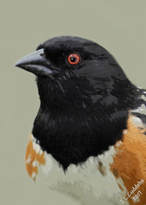 """Chewink Goes the Towhee"""
