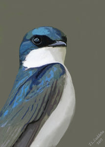 Tree swallow portrait print by Judy Link Cuddehe for Found Link Press.
