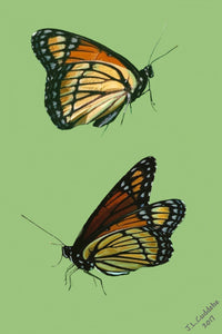 Viceroy butterflies print by Judy Link Cuddehe for Found Link Press.