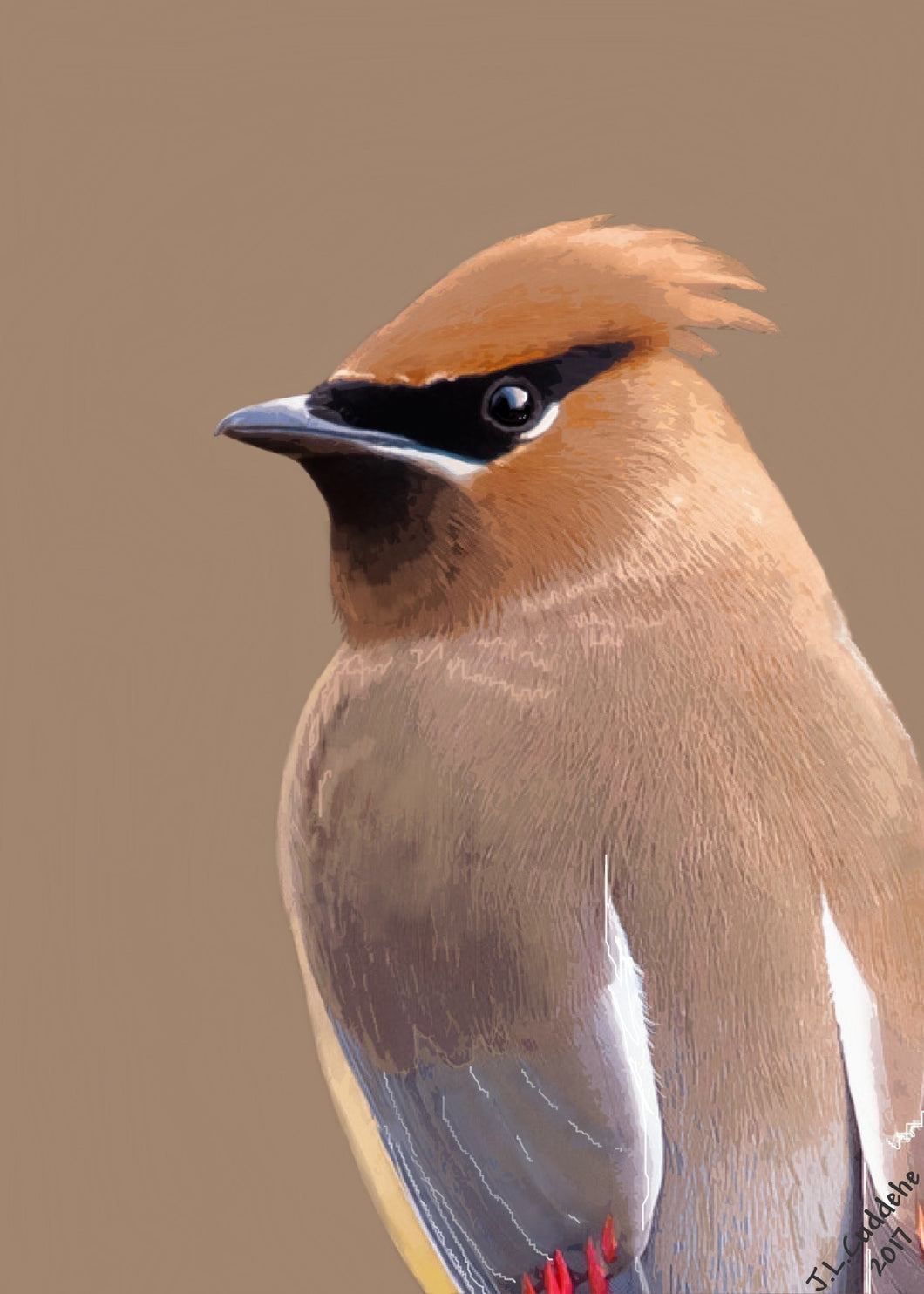 Ceder Waxwing portrait print by Judy Link Cuddehe for Found Link Press.