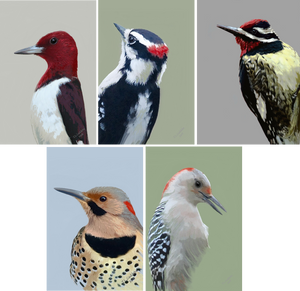 """Woodpeckers"" Card Set"