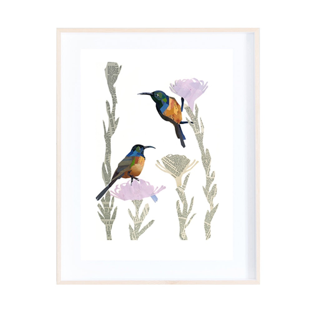 Orange-breasted Sunbirds Collage Print