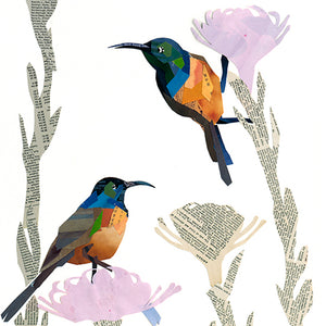 Orange-breasted Sunbirds