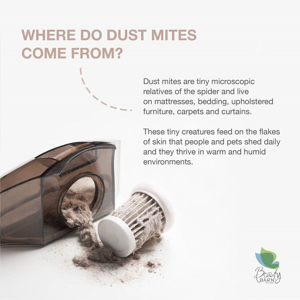 Where do Dust Mites come from?