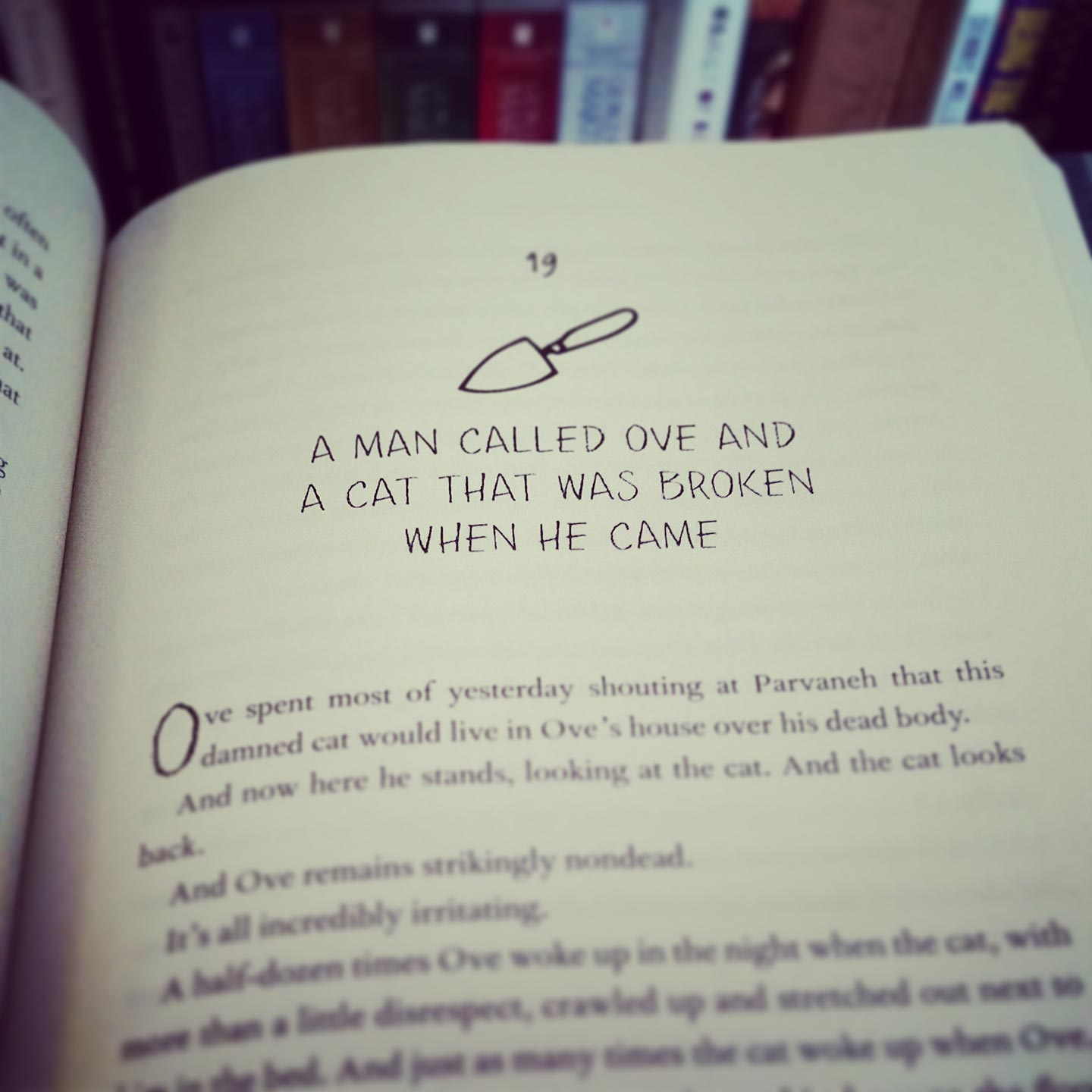 a man called ove and the cat