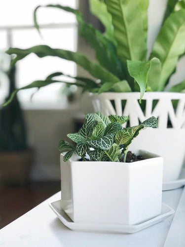 White Hexagon Planter - Home & Garden