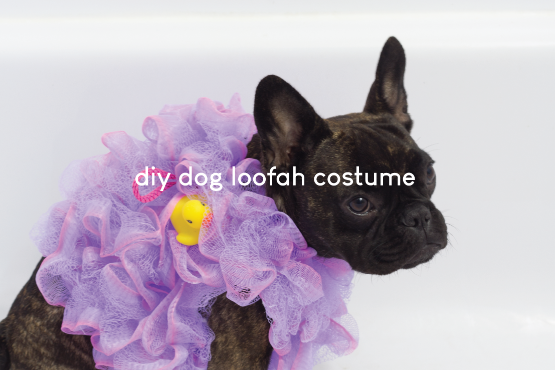 DIY Dog Loofah Costume
