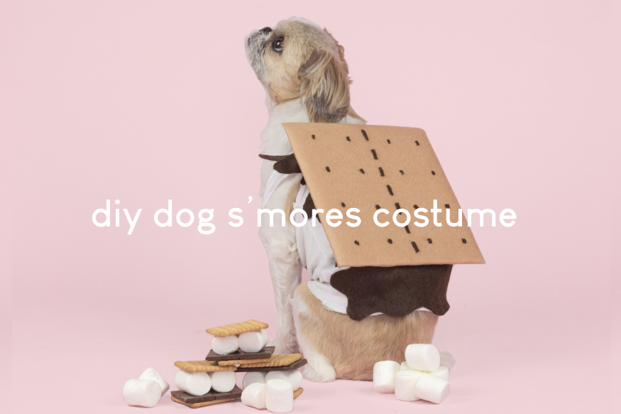 DIY S'mores Dog Costume