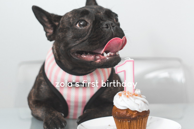 zola's 1st birthday