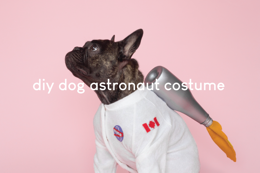 DIY Dog Astronaut Costume