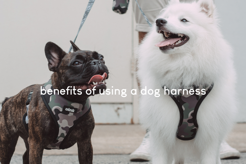 benefits of using a dog harness