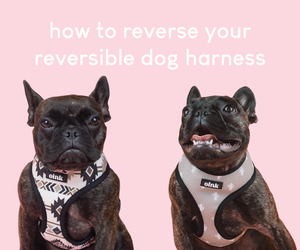 how to reverse your reversible dog harness