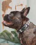 Oink Pet Supply Dog Collar - Aztec Print