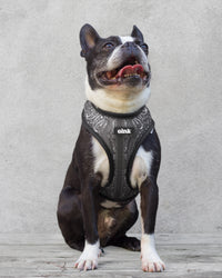 oink reversible dog harness - Bandana Print