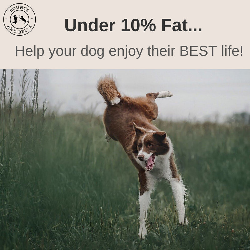 An infographic. The main image features a border collie jumping through some long grass. Above the image is a banner stating Under 10% fat! Help your dog enjoy their BEST life!