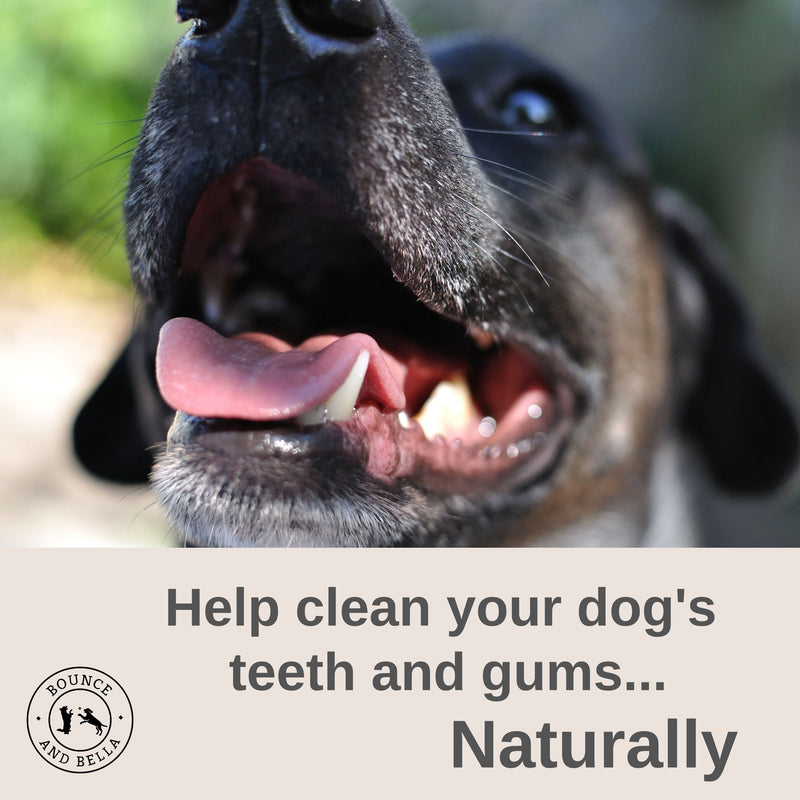An infographic featuring the main image of a close-up shot of a dog with its mouth open slightly showing its teeth looking up. Below the image is a banner stating 'Help clean your dog's teeth and gums naturally'