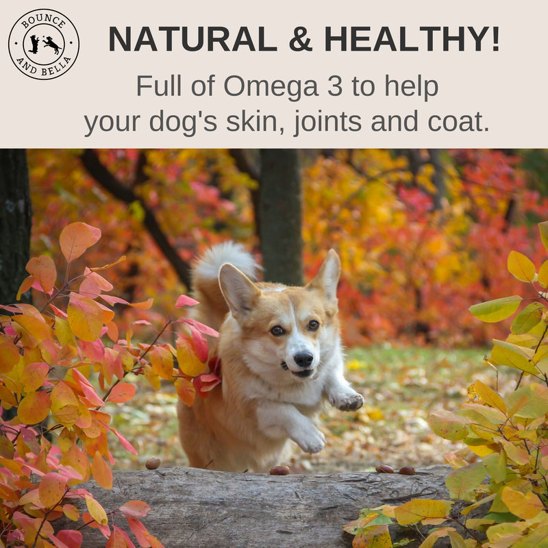 An infographic featuring the main image of a corgi jumping over a log. Above the image is a banner stating Natural & Healthy! Full of Omega 3 to help your dog's skin, joints and coat.