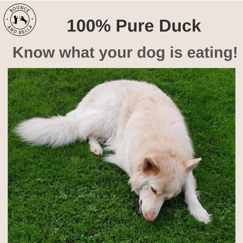 Pure Duck Nibbles Puppy Training Treats from 8 Weeks: An infographic. The main image is of Roscoe, a German Shepard, lying in the graph nibbling on his treats. Above the image, text stating 100% Pure Duck - Know What Your Dog Is Eating!