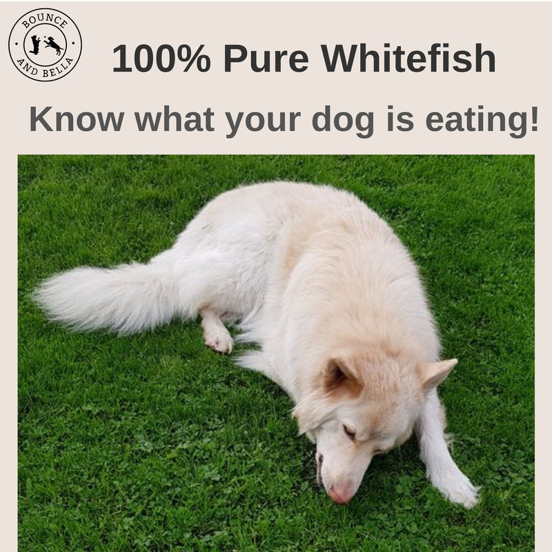 Fish Skin Snacks – Low Fat Dog Treats. An infographic. The main image is of Roscoe, a German Shepard, lying in the graph nibbling on his treats. Above the image, text stating 100% Pure Whitefish - Know What Your Dog Is Eating!