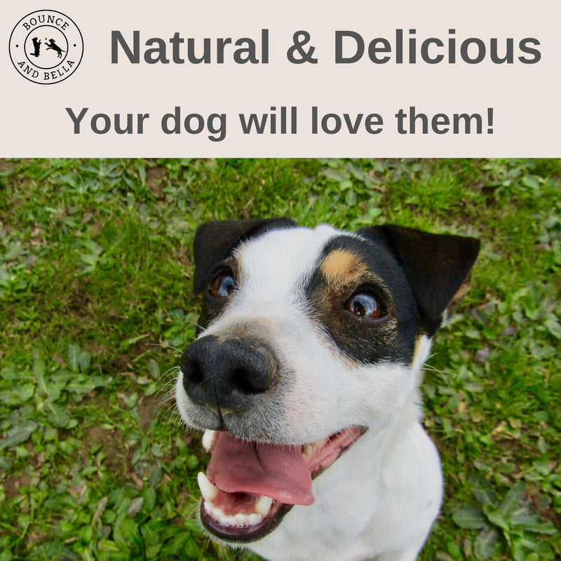 An infographic featuring the image of a terrier gazing up at the camera happily. Above the image is the caption 'Natural & Delicious. Your dog will love them!'