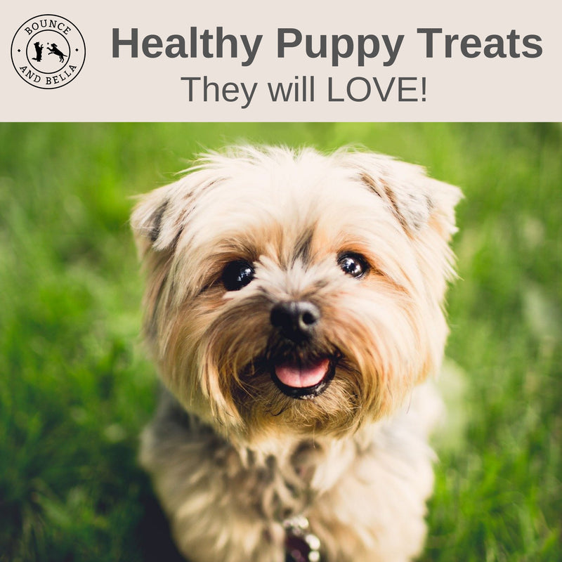 An infographic with the main image being a small dog looking up at the camera happily. The caption above states Healthy Puppy Treats They Will LOVE!
