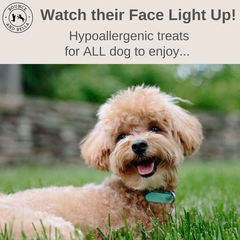 An infographic, main image of a young dog sitting in the grass with the banner above saying 'Watch their Face Light Up! Hypoallergenic treats for ALL dogs to enjoy!'