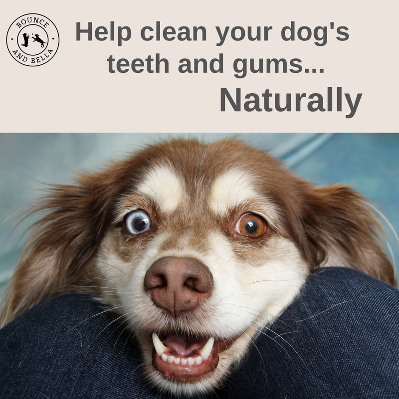 Natural Dog Dental Chews - Chicken, Beef and Green Tea