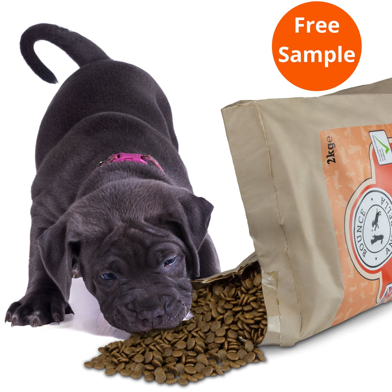 A small puppy beside an open bag of Steam Cooked Fish and Vegetables Grain-Free Complete Dog Food. The bag is open slightly with the dog food spilling out and the puppy leaning down to take a bite.