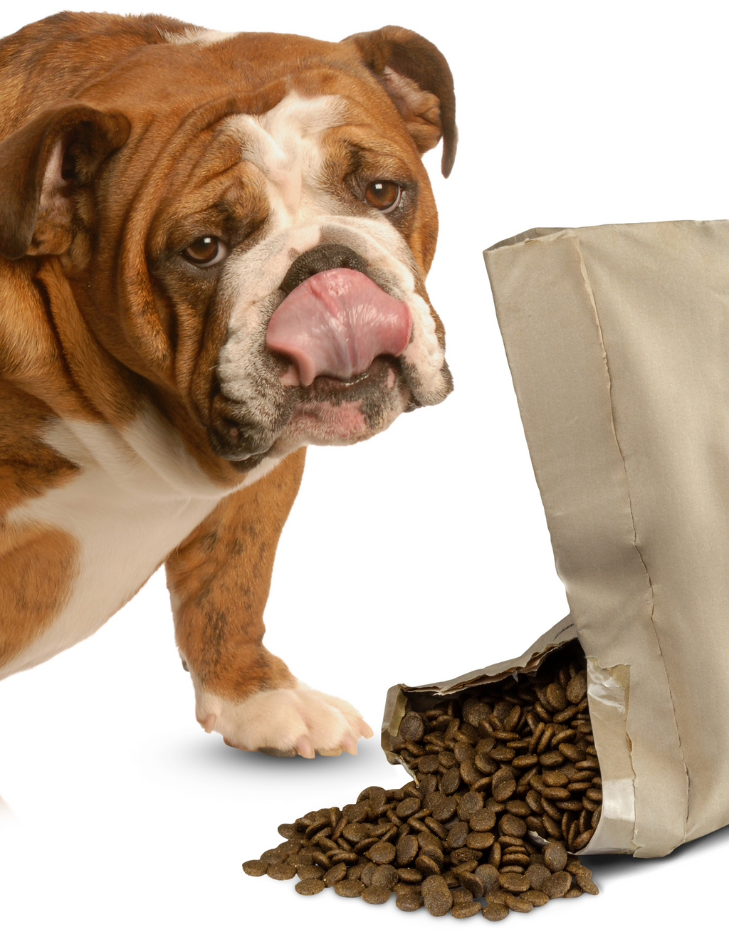 An English Bulldog standing beside an open bag of Aromatic Chicken and Veg Dog Food. The bag is open slightly with the dog food spilling out and the Bulldog licking its nose. Complete Grain-Free Dry Dog Food 95% Chicken and Veg plus 5% Added Goodness... for Pet Parent Peace of Mind