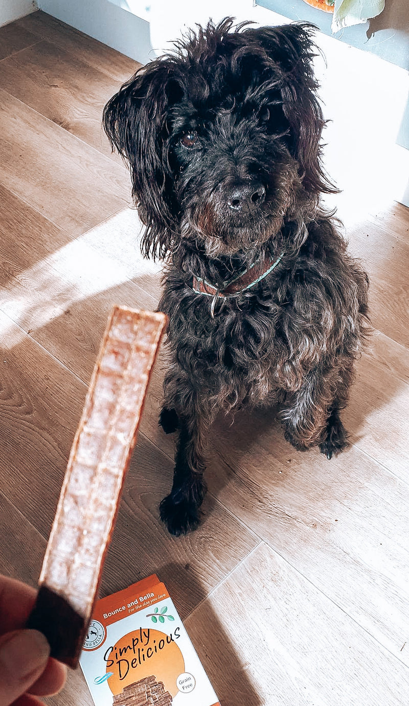 An image of a small black dog on its back legs waiting for a Beef Chew.