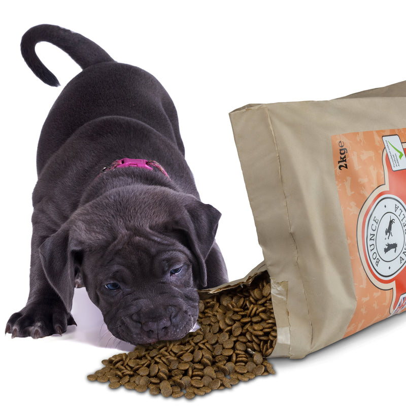 Grain Free Puppy Food - Fish
