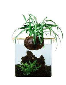 Filtration naturelle CocoGarden - Aquaponie pour aquarium < 10L