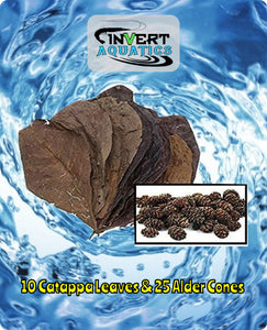 10 Catappa Leaves & 25 Alder Cones Aquariums