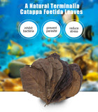 "10 Catappa Leaves & 25 Alder Cones Aquariums (Indian Almond Leaves, Terminilia) 5-8"" Long"