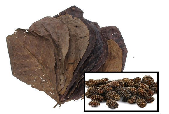 10 Catappa Leaves & 25 Alder Cones Aquariums (Indian Almond Leaves, Terminilia) 5-8