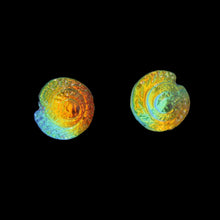 Nautilus Stud Earrings