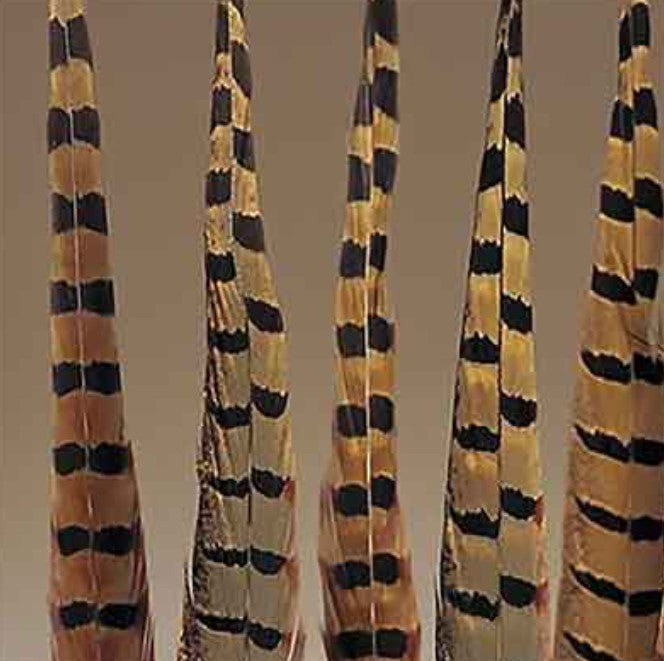 Pheasant feathers 14