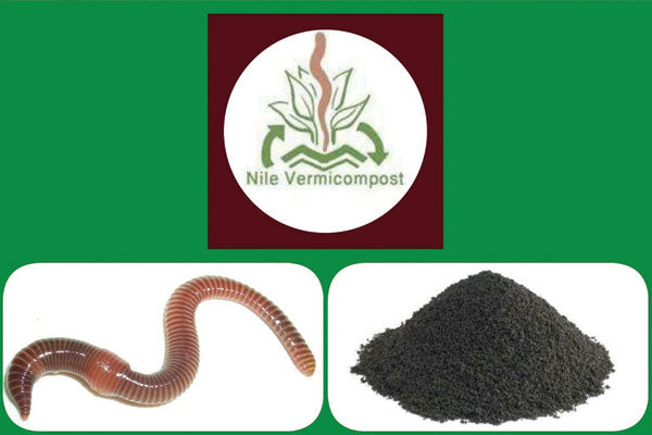 nile vermicompost image