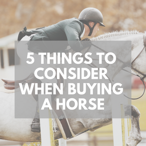 5 Things To Consider When Buying a Horse