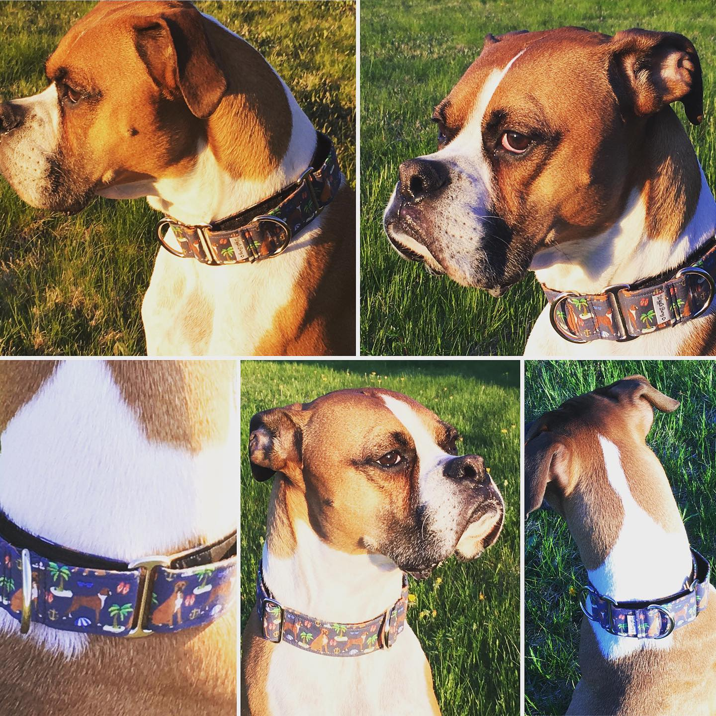 Boxers on The Beach Navy On Dog | BigPawShop.ca