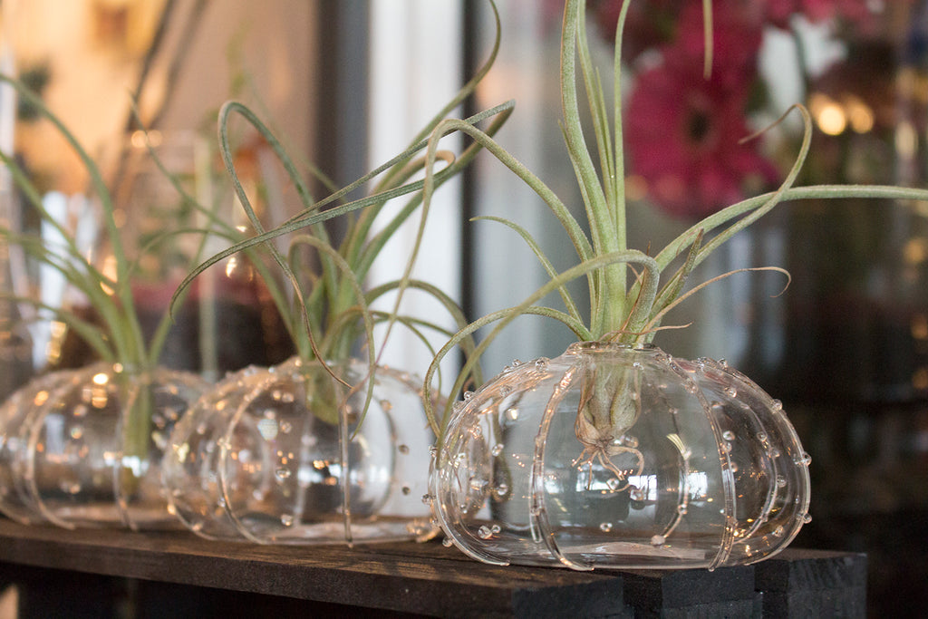 5 Ways To Use Your Tillandsia