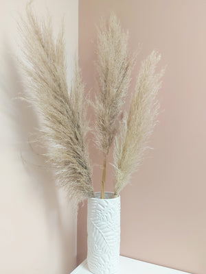 Natural Pampas Grass