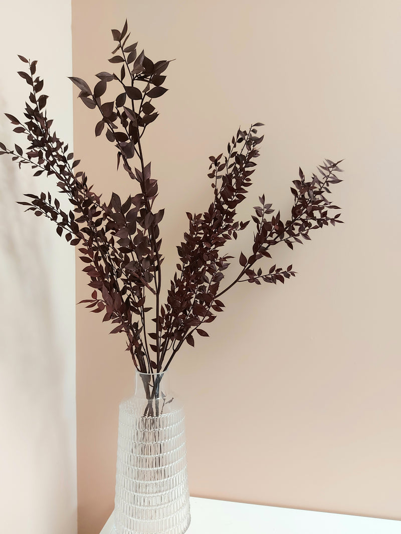 Burgundy tinted preserved Italian Ruscus
