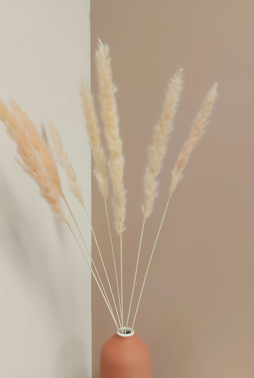 Blush Mini Pampas Grass