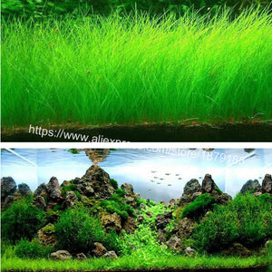Aquarium Landscape Mini Leaf Live Plant Fish Tank Decoration
